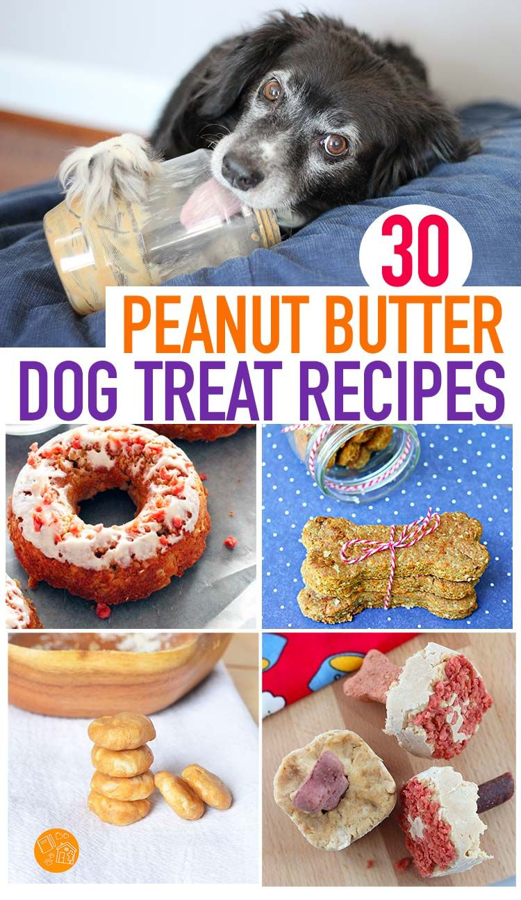 30 Easy Peanut Butter Dog Treat Recipes Your Pup Will Love