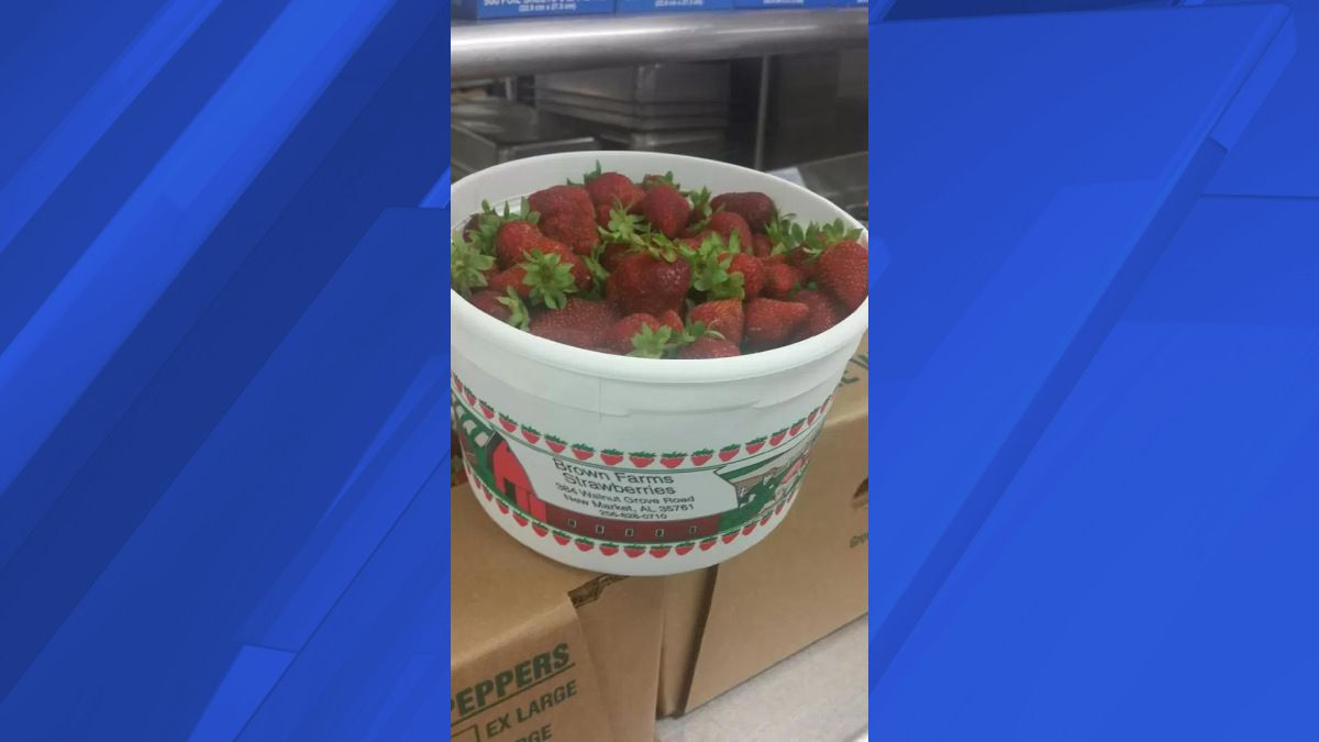 Locally grown strawberries delivered to Madison County, Alabama, middle  schools. What's the big