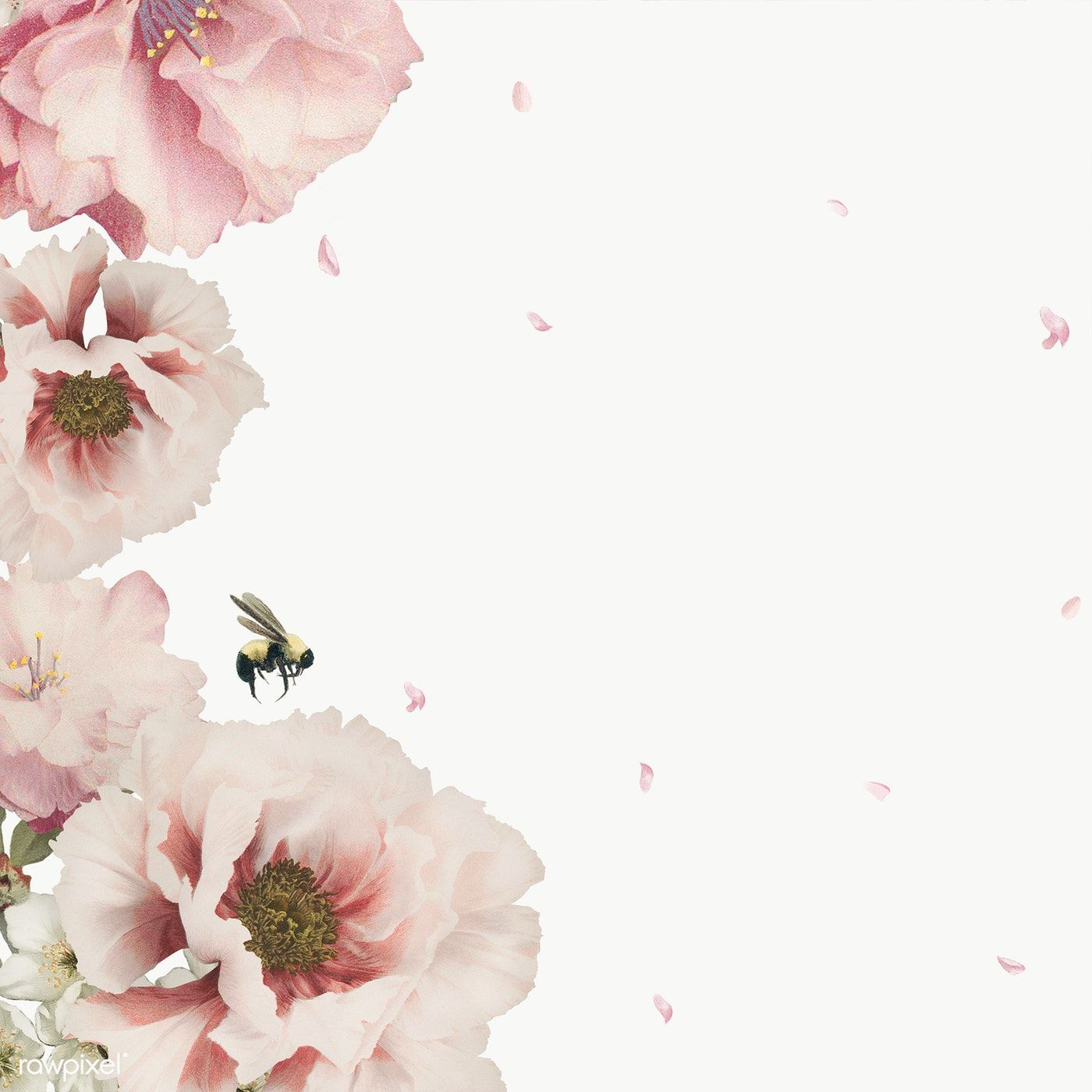 Pink Flowers Frame Transparent Png Free Image By Rawpixel Com Nam In 2020 Flower Frame White Anemone Flower Pink Flowers