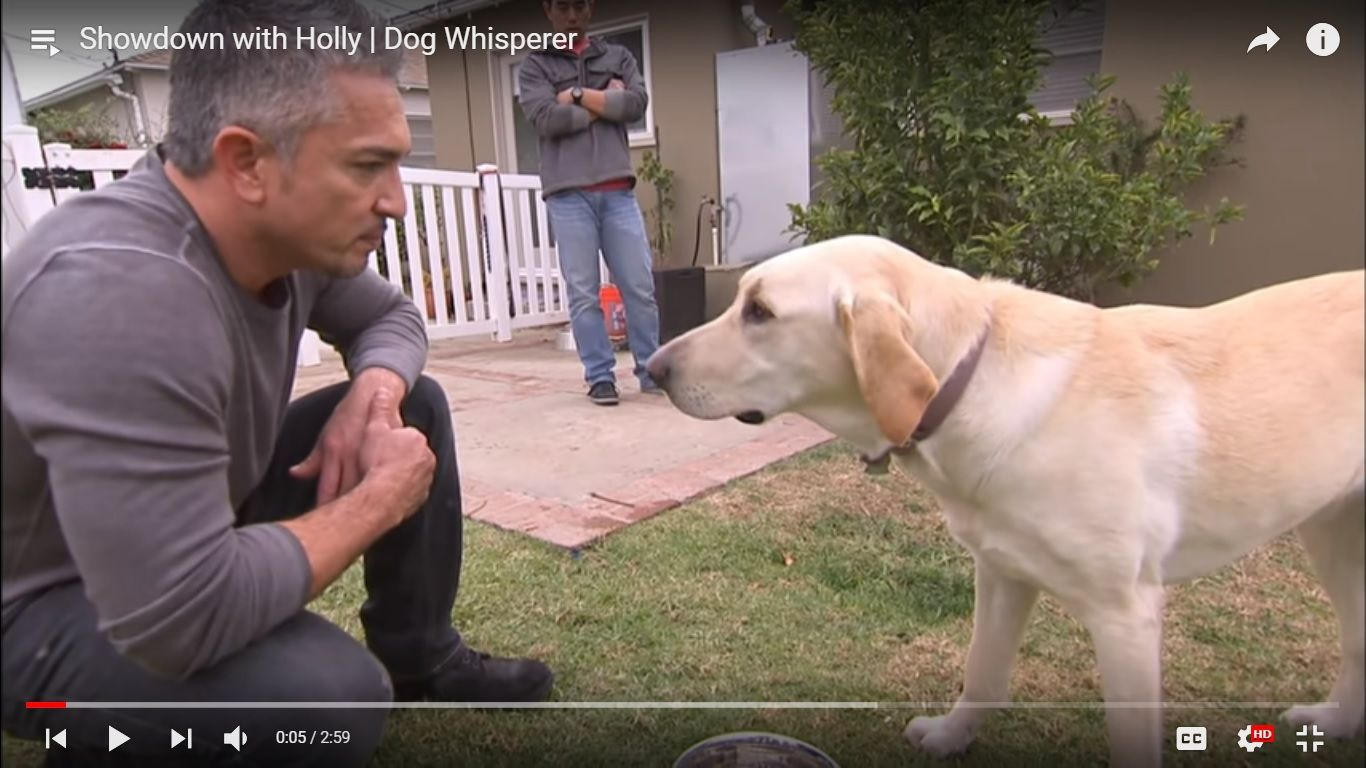 Here Is A Collection Of Cesar Millan S Best Dog Training Videos On