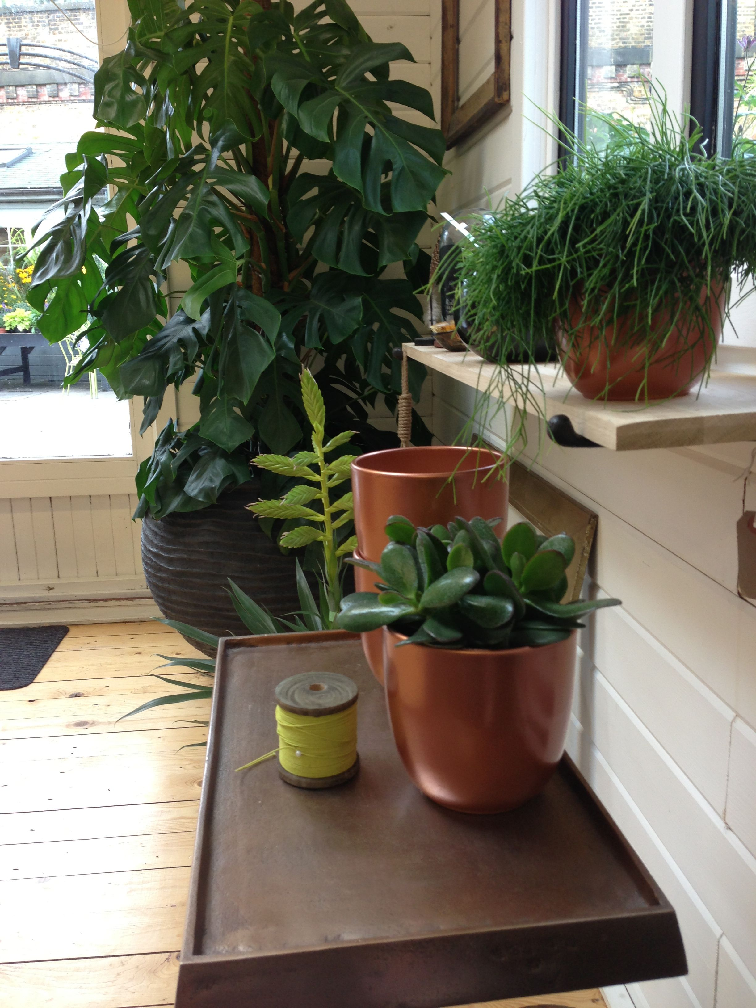 Copper Pots With Rhipsalis, Crassula, And Monstera