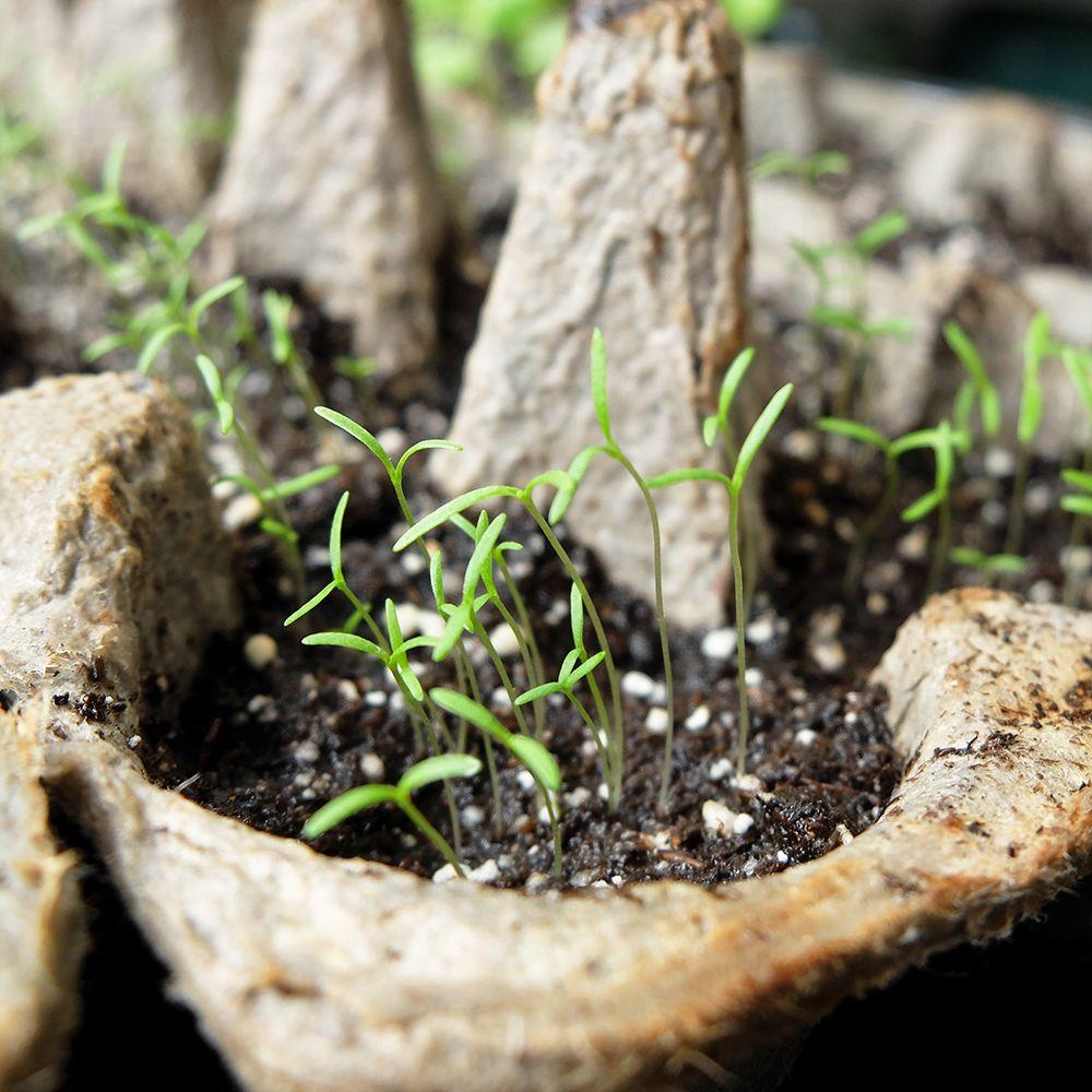 Flower Seeds | Turning Moss | Poppy flower seeds, Flower seeds, Seeds