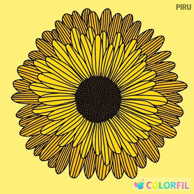 Bunga Matahari Bunga Bunga Matahari