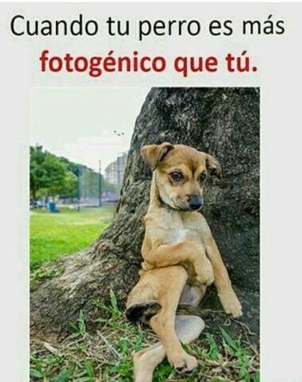 62 Ideas For Memes Divertidos De Amigos Funny Spanish Memes Dog Memes Memes