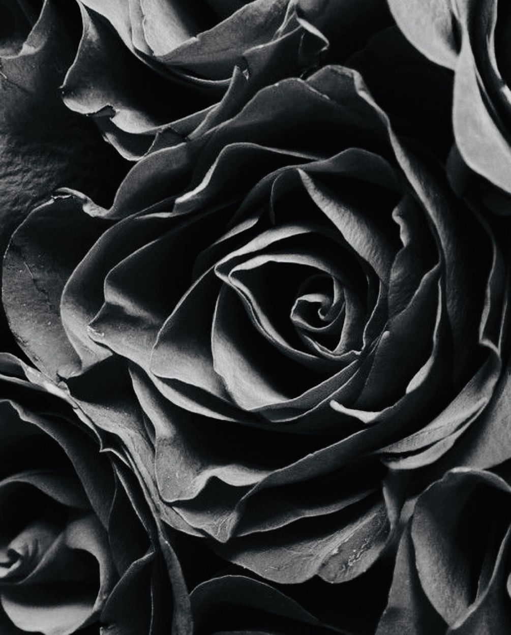 Pin By Rachel Goins On Touches Of Color In 2020 Black Roses Wallpaper Black Rose Rose Images