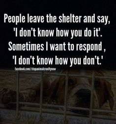 Volunteer At Gimme Animal Shelter By Bathing Animals Walking Dogs Socializing Cleanin Animal Rescue Quotes Animal Shelter Volunteer Animal Shelter