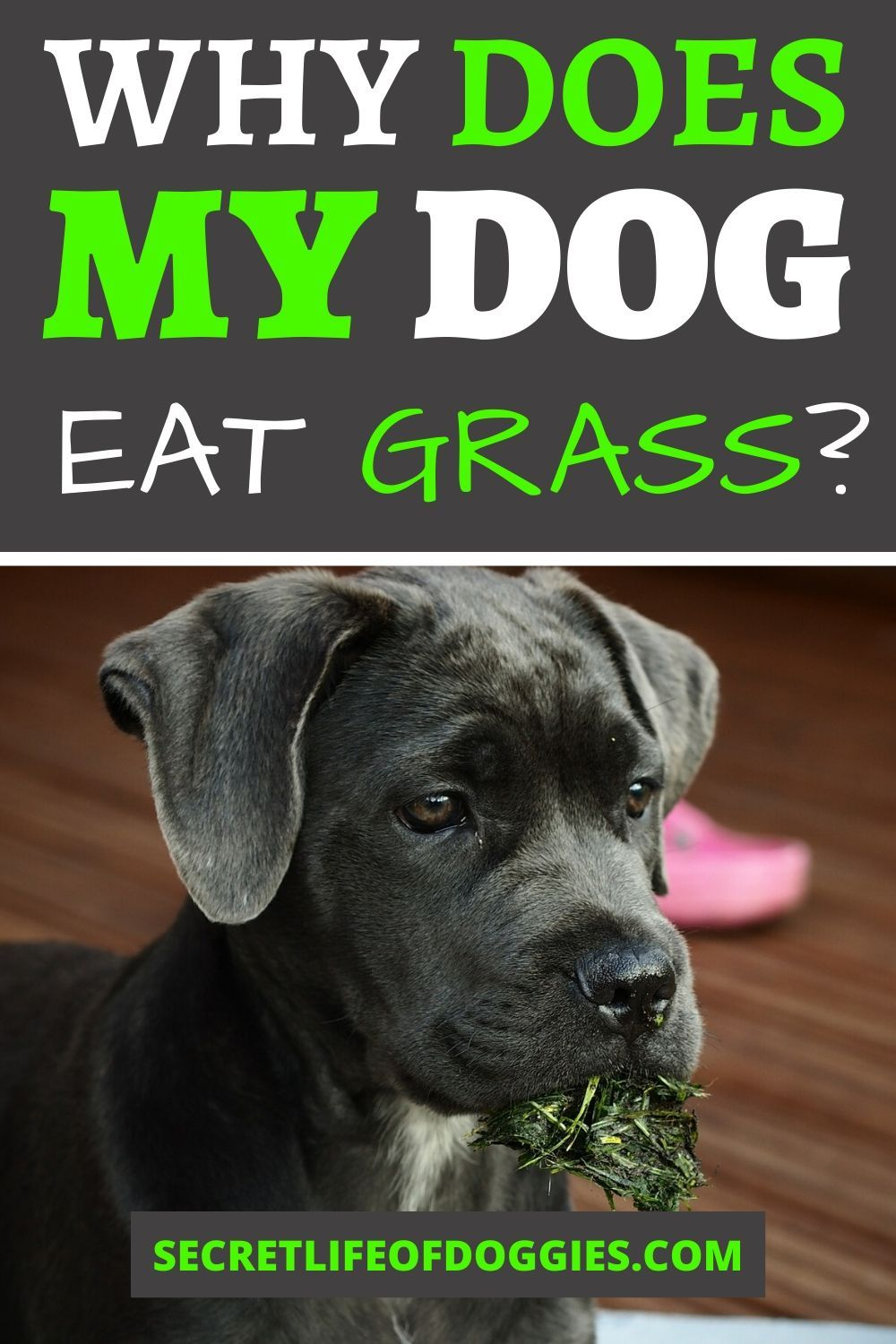 Dogs Love To Roll Over And Play On A Vast Green Yard But