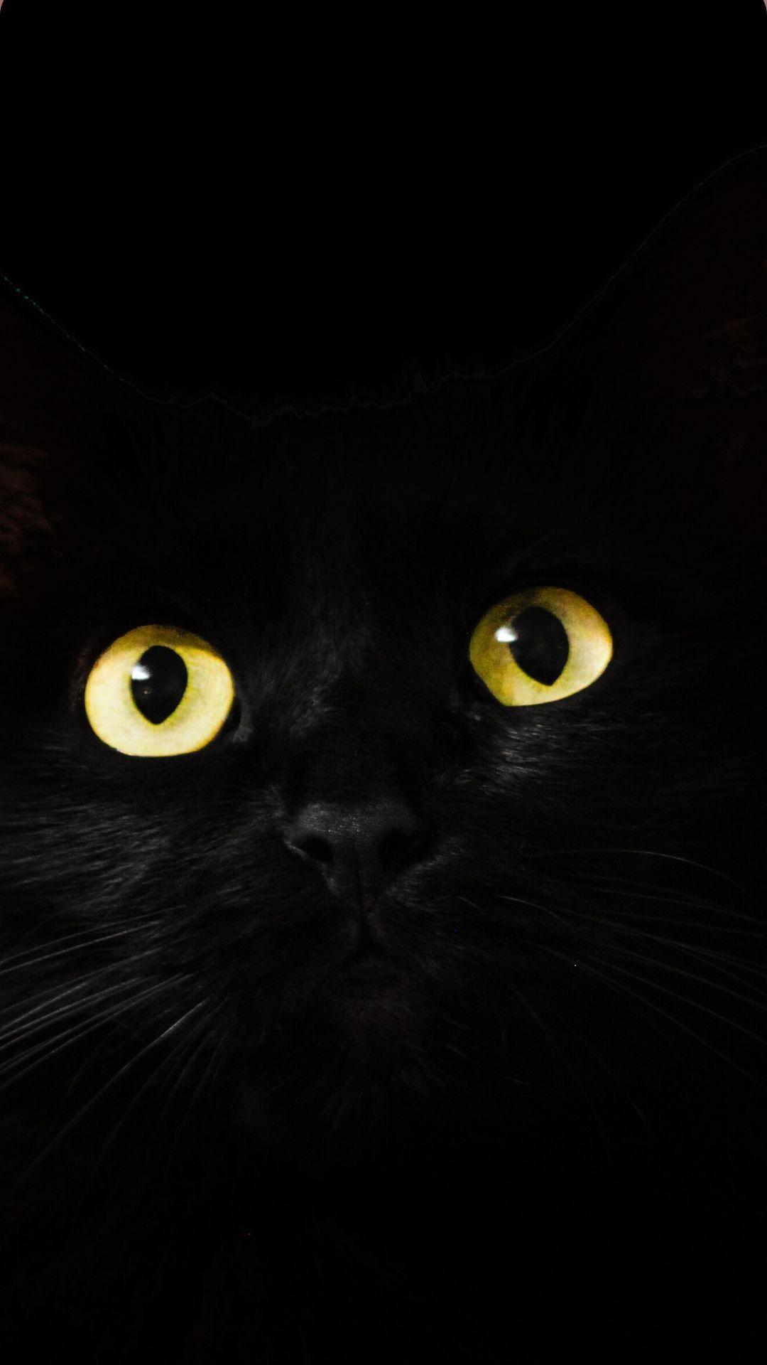 Iphone Black Cat Wallpaper Black Cat Pictures Black Cat Drawing Cute Black Cats