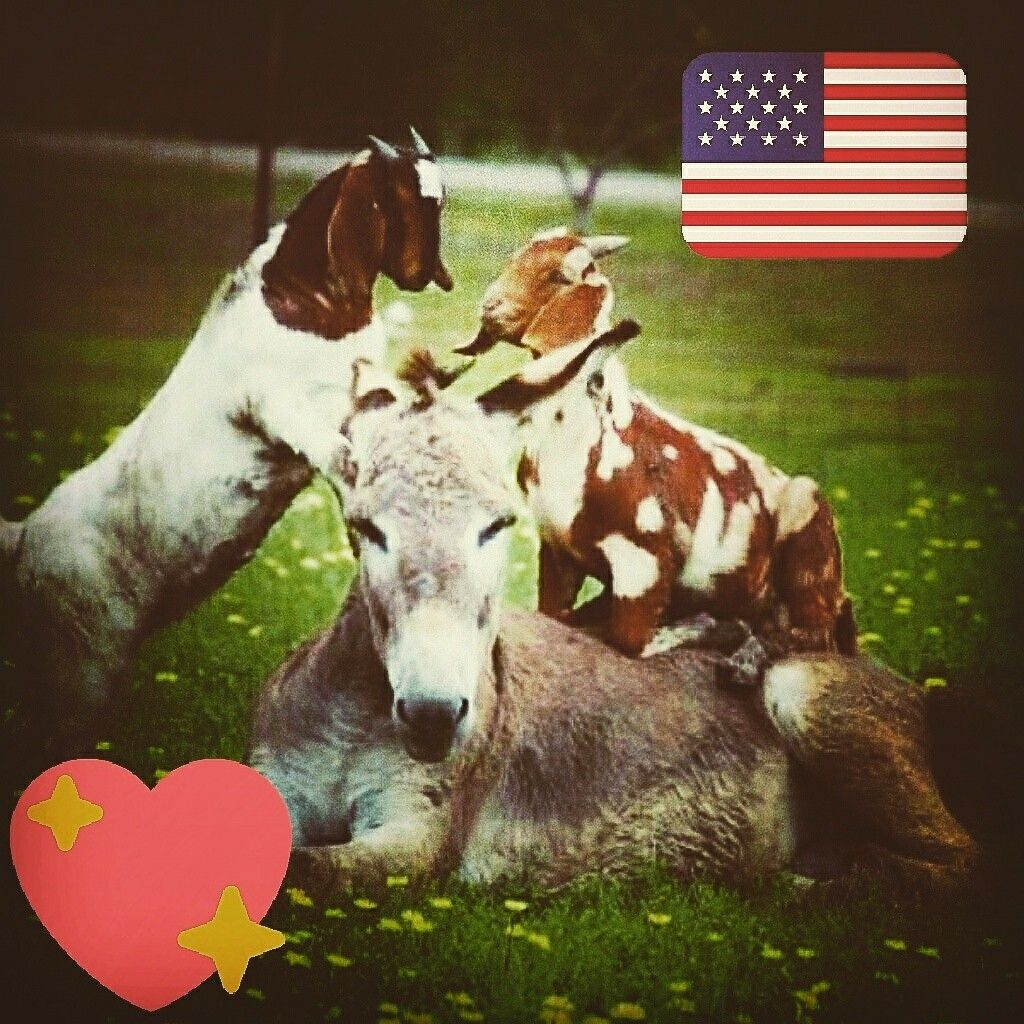 Good Evening 🍂🍂 🇺🇲🌹 🍁💝 Animals, God bless america, Horses