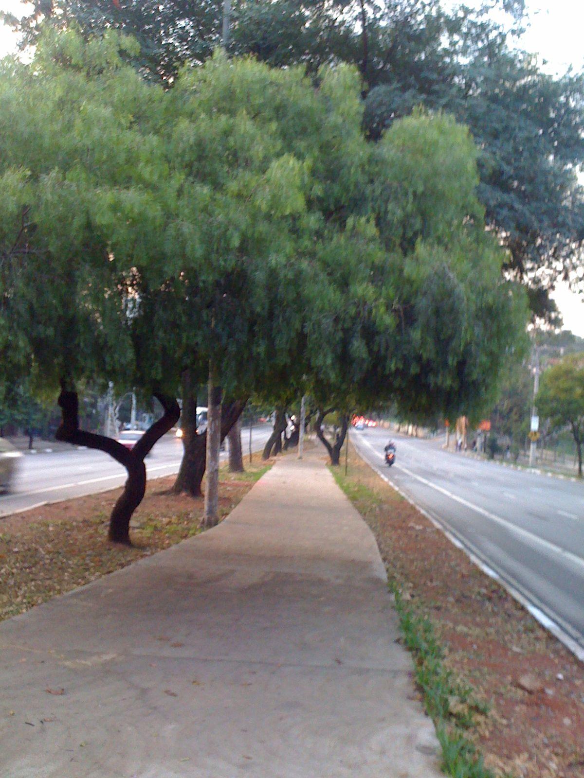 Caminhada na Sumaré/SP