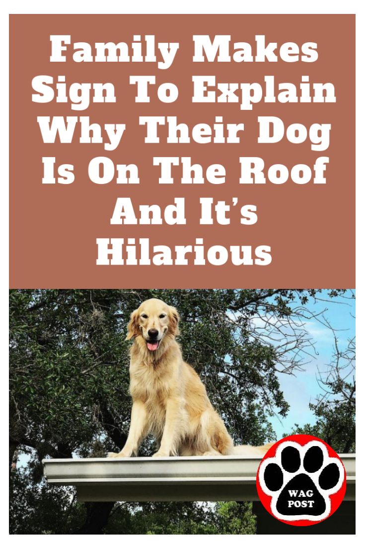Family Makes Sign To Explain Why Their Dog Is On The Roof And It S Hilarious In 2020 Funny Puppy Pictures Puppies Funny Puppy Funny Memes