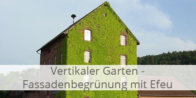 Ein Vertikaler Garten Kann Mit Efeu Angelegt Werden