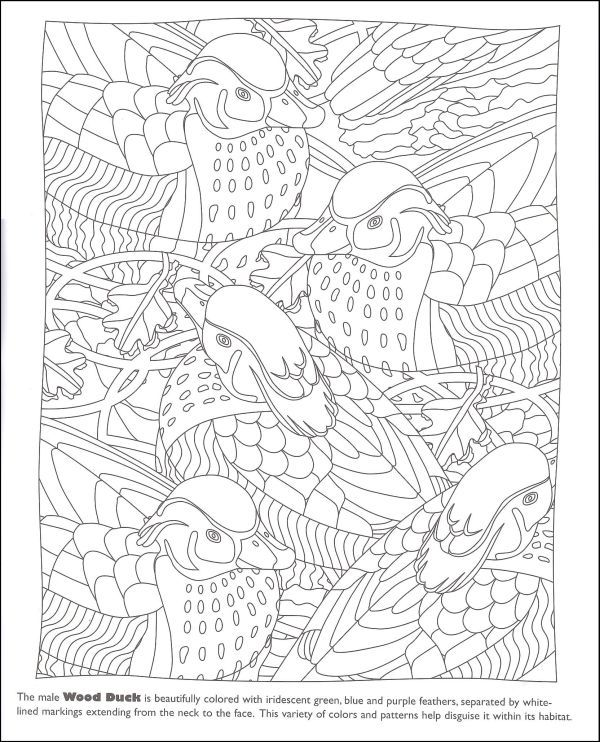 Hidden Feathers Coloring Book | Additional Photo (Inside Page ...