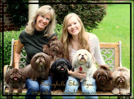 We Specialize In Gorgeous Akc Liver Chocolate Shih Tzu Puppies With Champion Shih Tzu Shih Tzu Puppy Shih Tzus