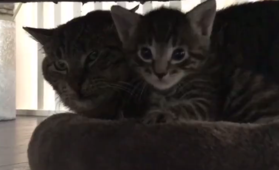 Fierce Former Feral Cat Has Surprising Reaction To Foster