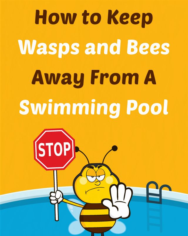 How To Keep Wasps And Bees Away From A Swimming Pool Wasp Summer Months And Bees