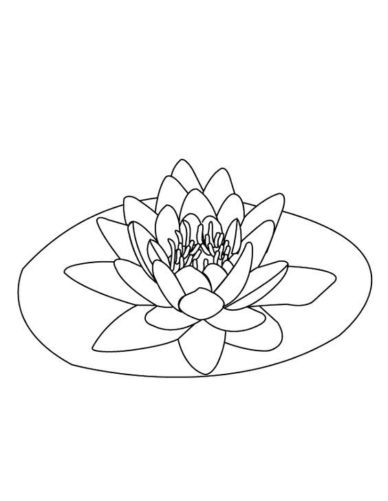 Kids Pages Water Lily Lilies Drawing Lily Pads Flower Coloring Pages