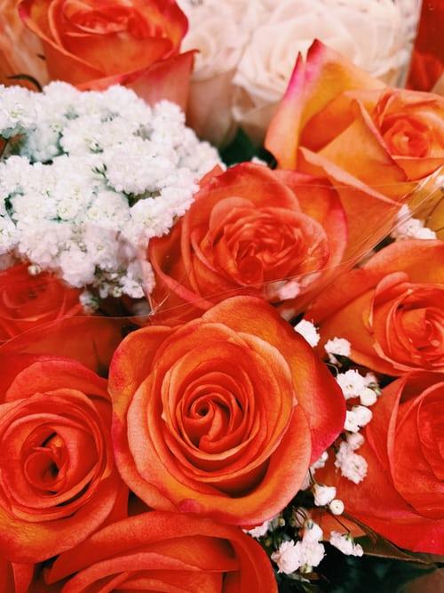 باقة ورد جميلة باقات ورد صباحية جميلة جدا باقة ورد كبيرة Zina Blog Orange Roses Rose Beautiful Roses
