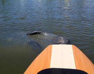 Three Brothers Boards Offers Paddle Board Tours In Daytona Beach On The Halifax River And