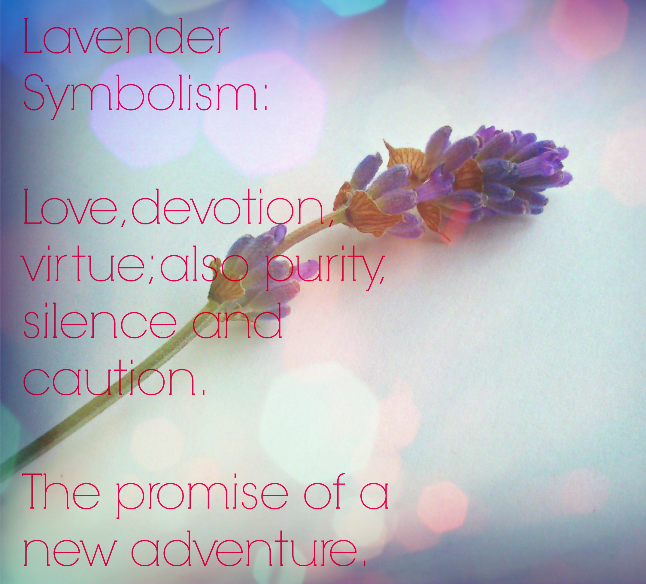 Lavender Meaning Of Flowers Love Symbolism Tattoo Pinterest