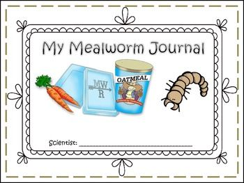 mealworm mealworm journal student teaching curriculum and social studies. Black Bedroom Furniture Sets. Home Design Ideas