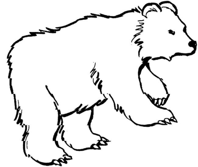 Bear Coloring Page Preschool