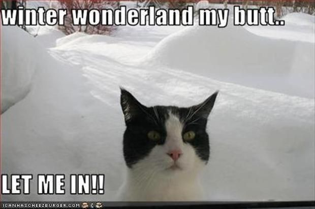 Funny Snow Pics with Captions | funny pictures of the day 63 pics february 20 2015 no comments funny ...