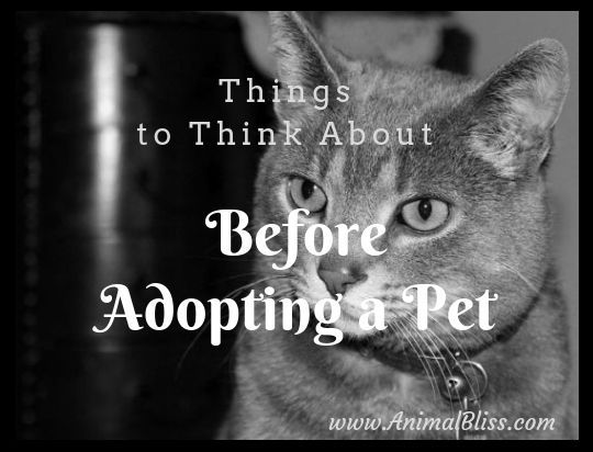 Things to Think About Before Adopting a Pet (With images