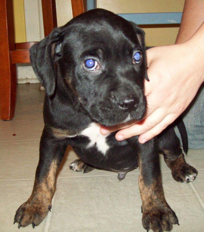 Adopt Brantly on Pet adoption, Animals, Adoption
