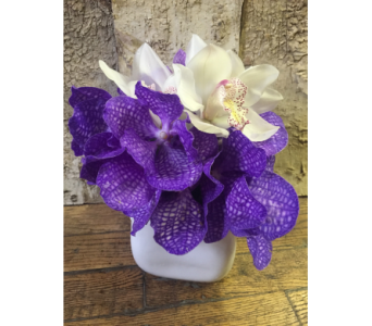 Orchid Dazzle In Houston Tx River Oaks Flower House Inc