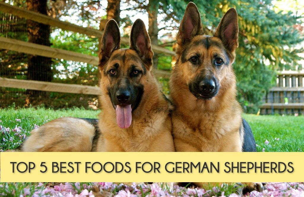 Best German Shepherd Puppies Food Eat These Best Healthy Dog