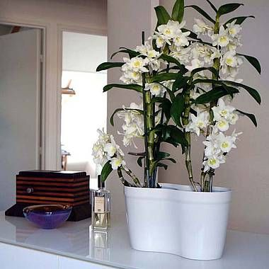 Quel cache pot pour orchidee
