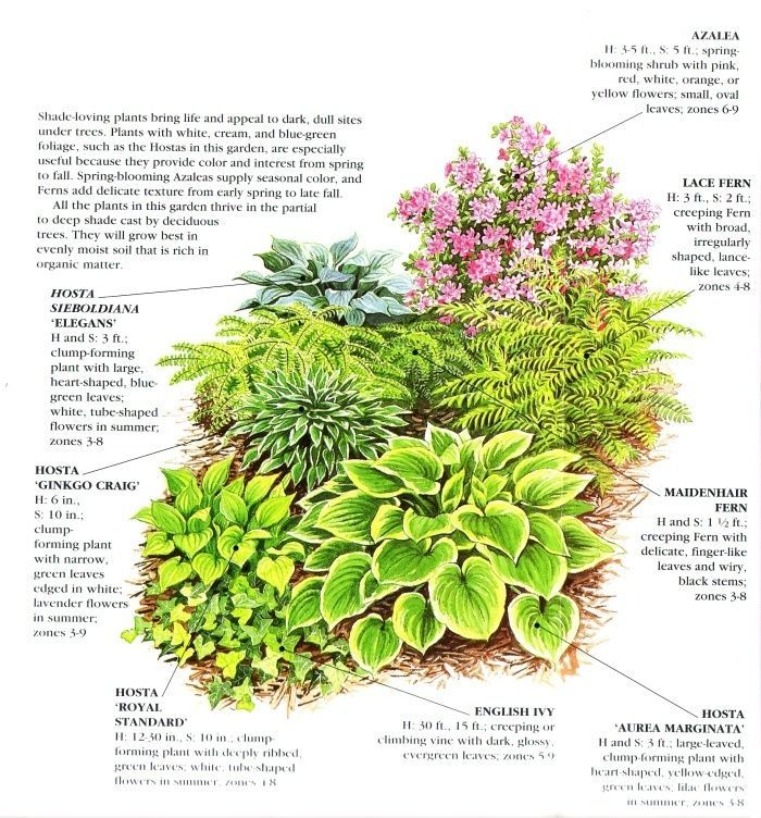 Zone 5 Shade Garden Plan