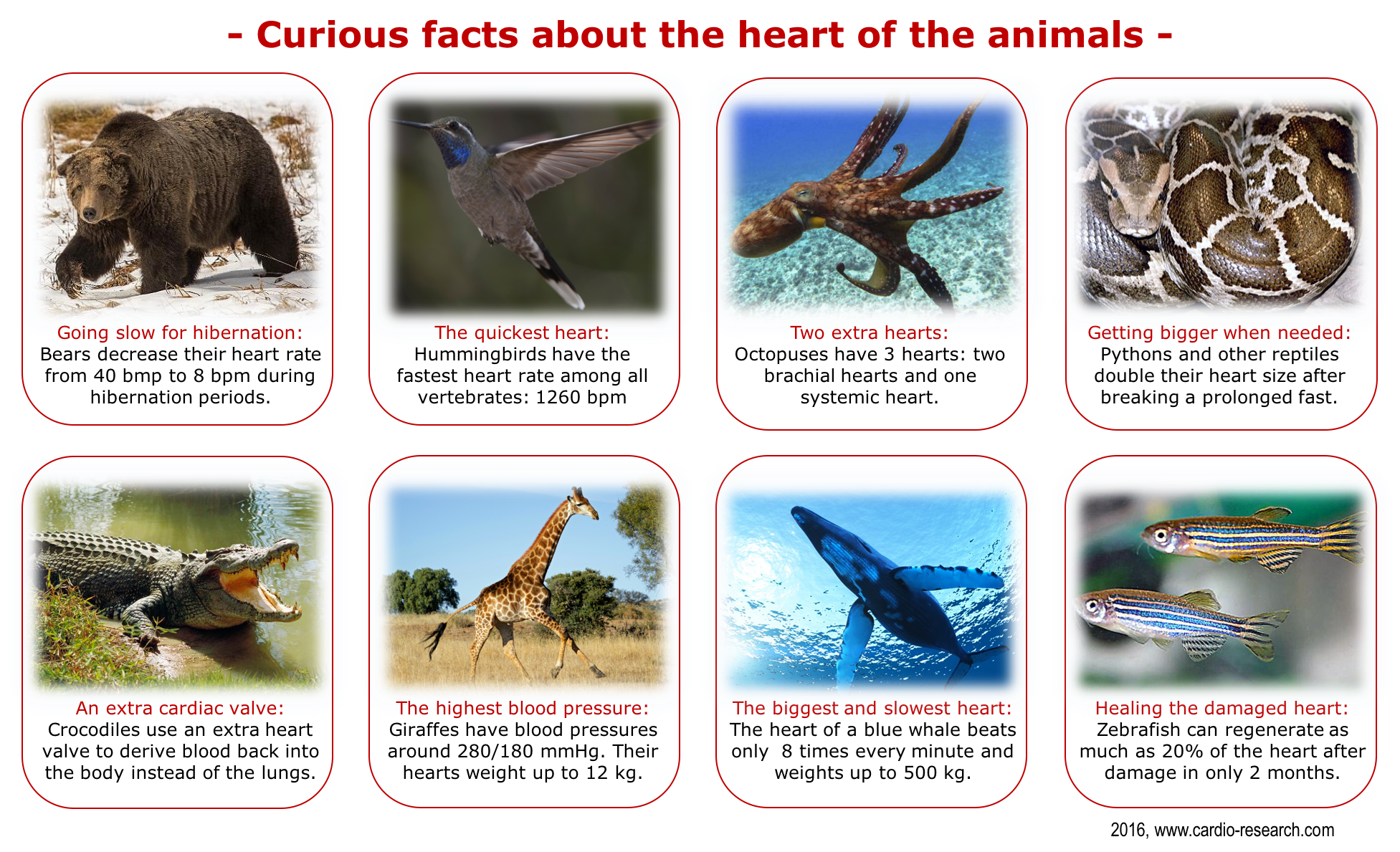 Curious Facts Animal Hearts A Site For Knowledge In