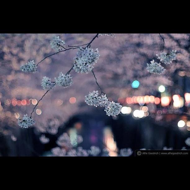 Celerbrating Hamani Japan By Alfie Goodrich