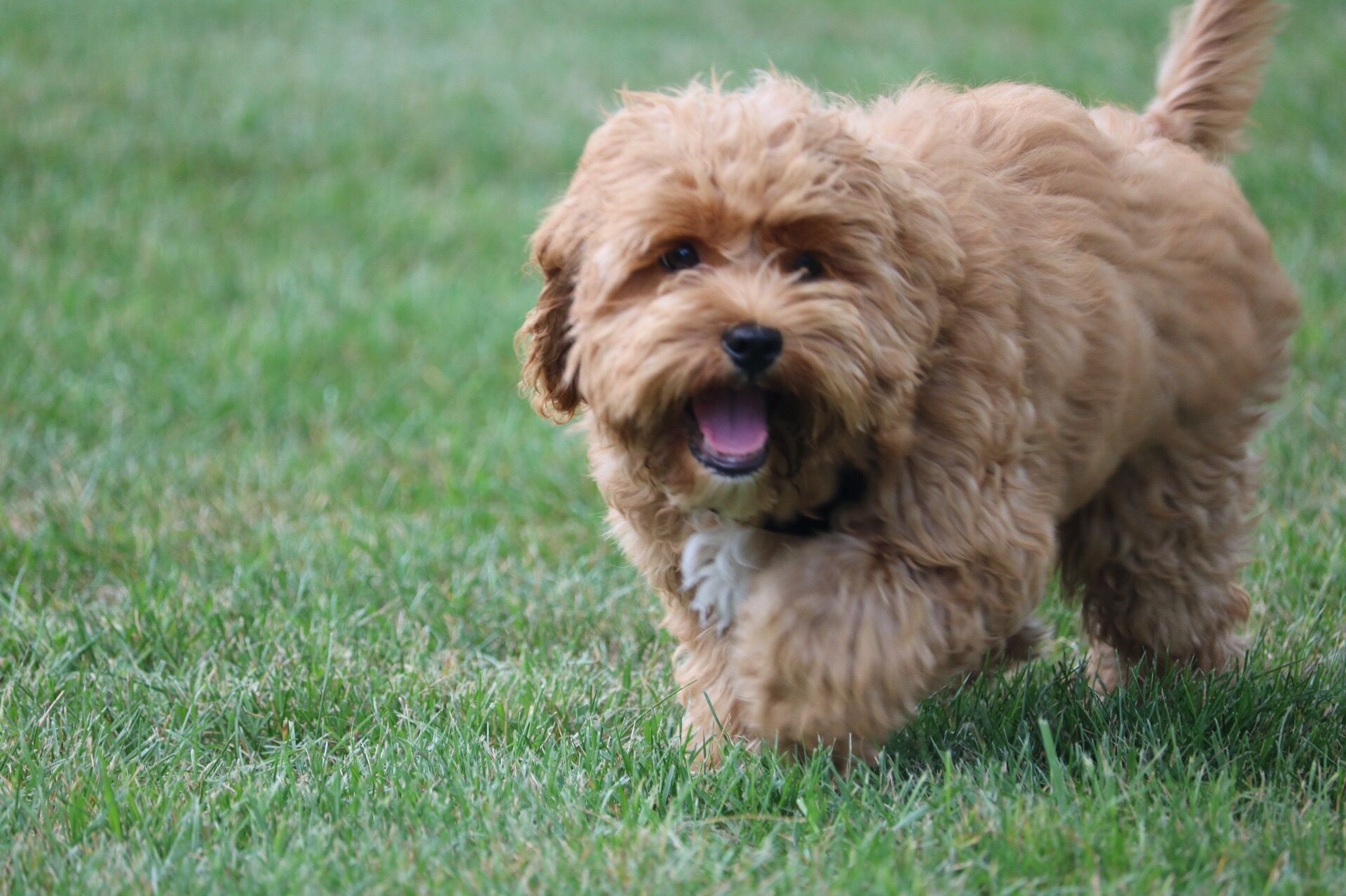 30 Small Dog Breeds That Make Great Pets Terrier Breeds Small