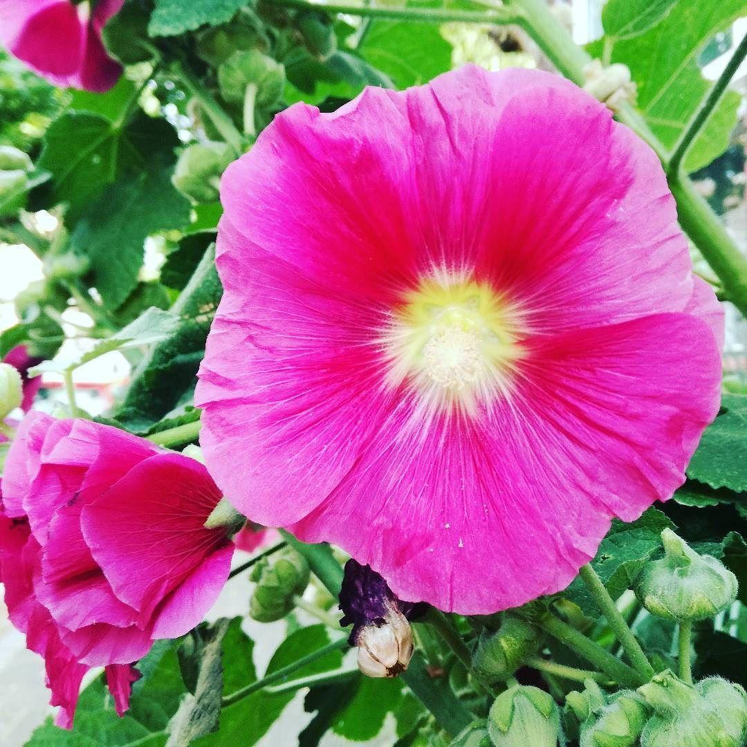 Malwa Zawsze Wywoluje Moj Usmiech Plants