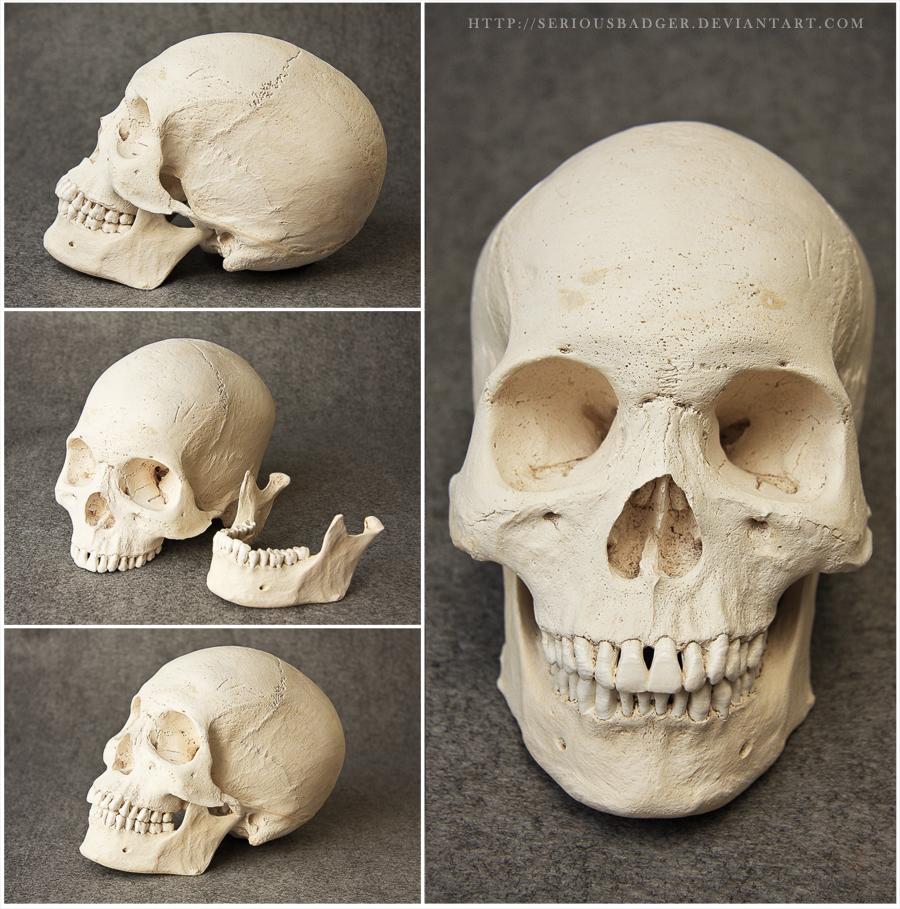 Human skull by seriousbadger | skulls | Pinterest
