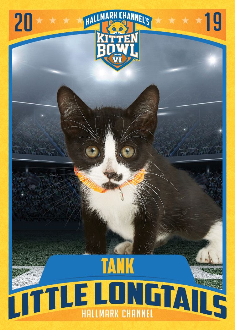 They Don T Call Tank The Pounce Machine For Nothing Cheer For Tank And The Little Longtails On February 3 When Kitten Bow Kitten Bowls Kitten Kittens Cutest