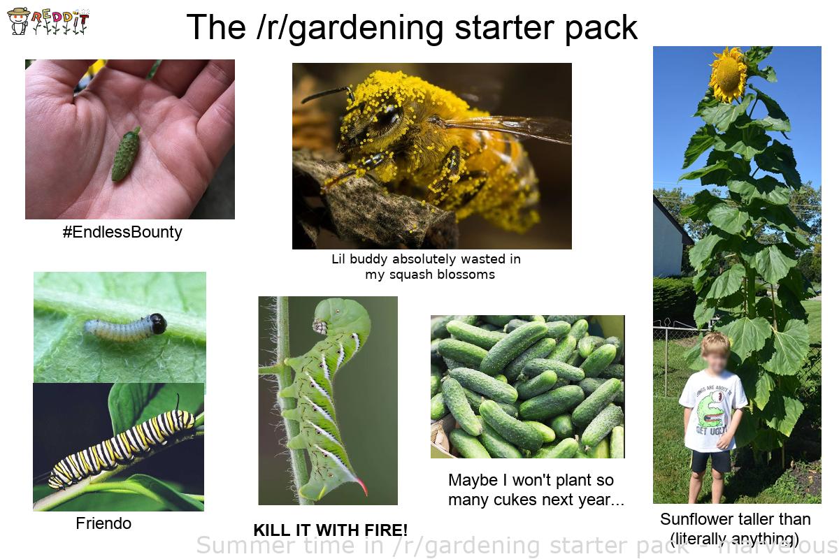 Gardening For Begginners Summer time in /r/gardening