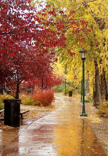 Estes Park Co Usa Autumn Scenery Estes Park Autumn Scenes