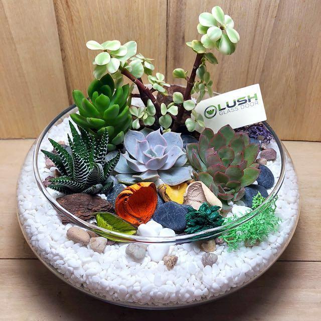 Lovely Benicio Succulents Arrangement Mid Range Terrarium #succulentterrarium