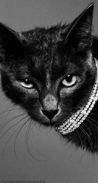 So much sass (With images) Cats, Crazy cats, Black cat