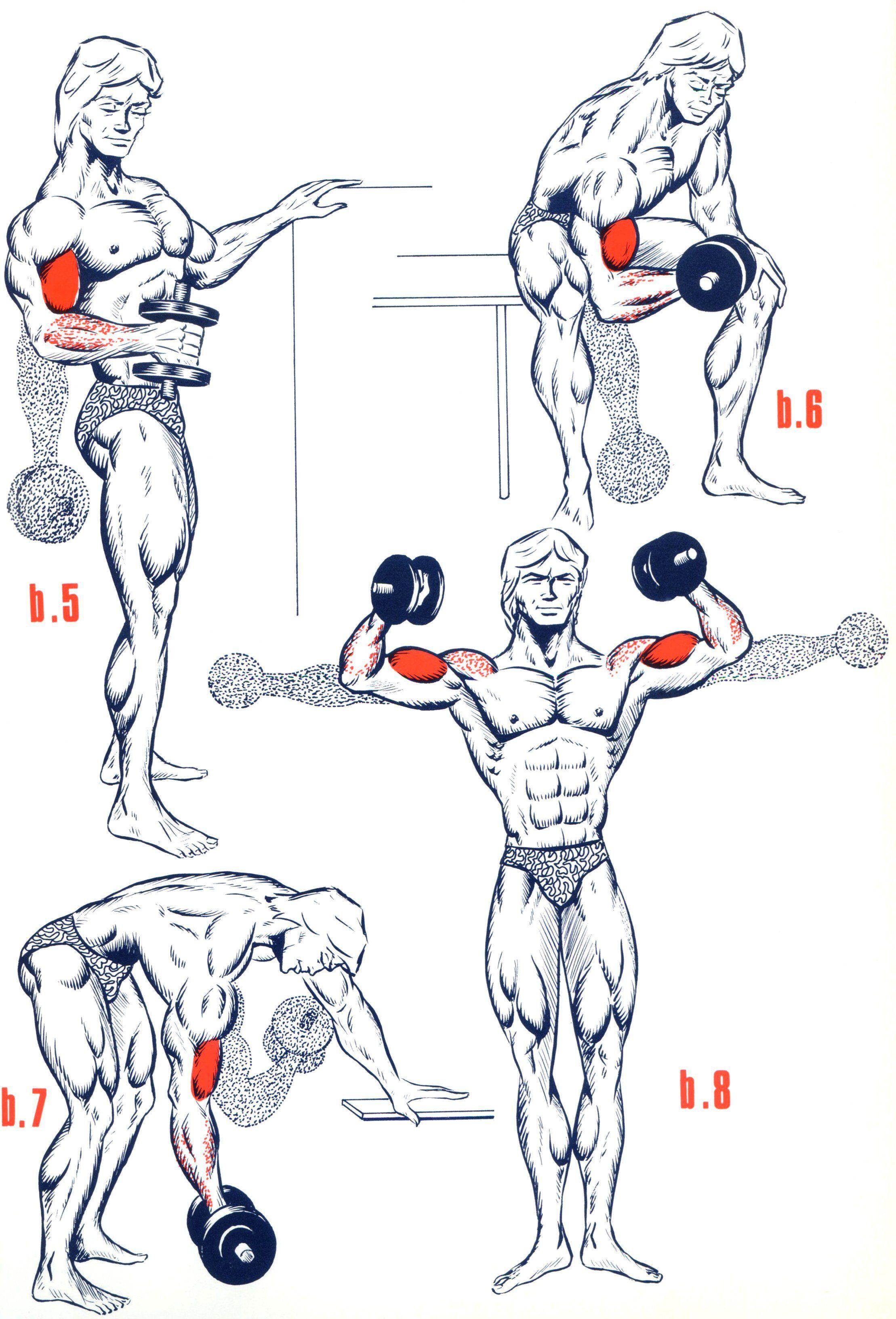 Exercices biceps musculation poids de musculation et for Des programmes de musculation