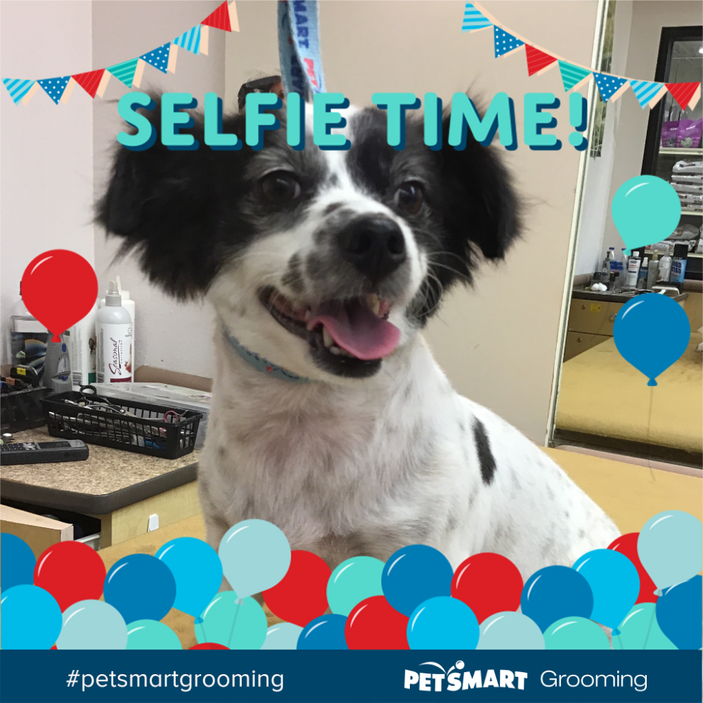 Pin By Mary Duke On Pet Pics Petsmart Grooming Petsmart Animal Pictures