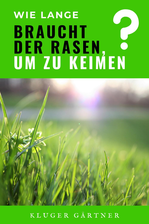 Wie Lange Braucht Der Rasen Um Zu Keimen Keimen Rasen Gartentipps