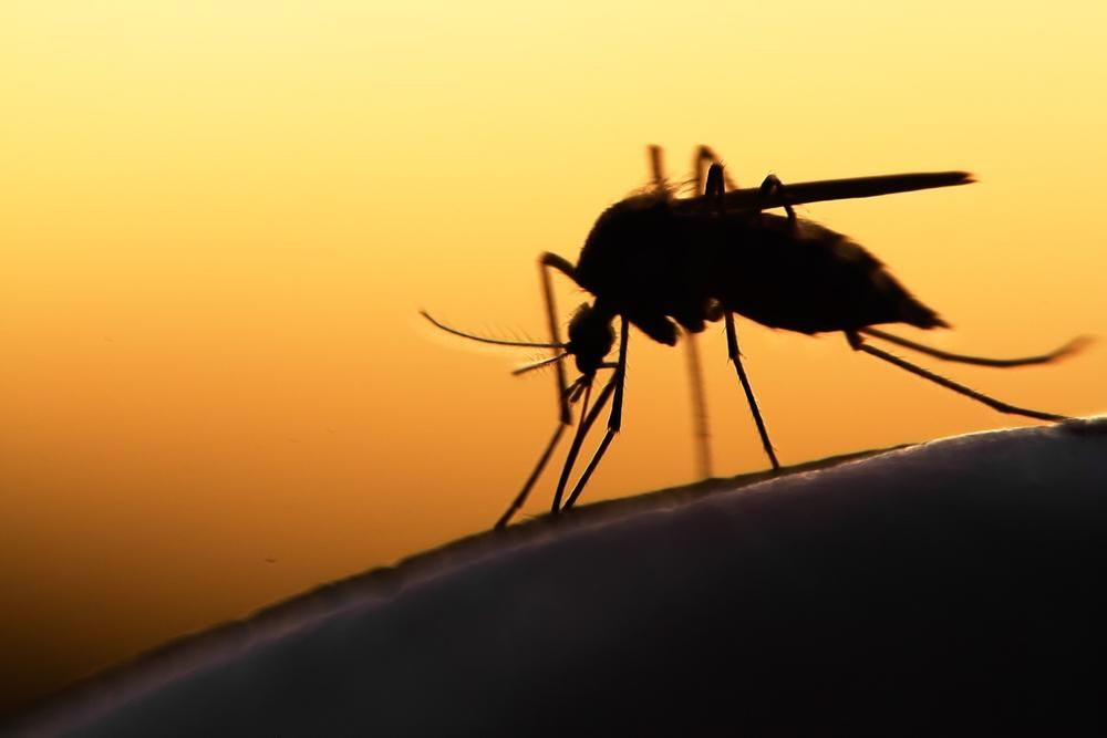 Microsoft is building drones and smart mosquito-traps to help combat diseases http://onvb.co/ZVK7WiN
