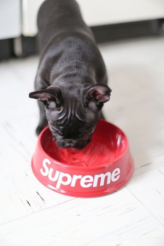 Preme for the pup.