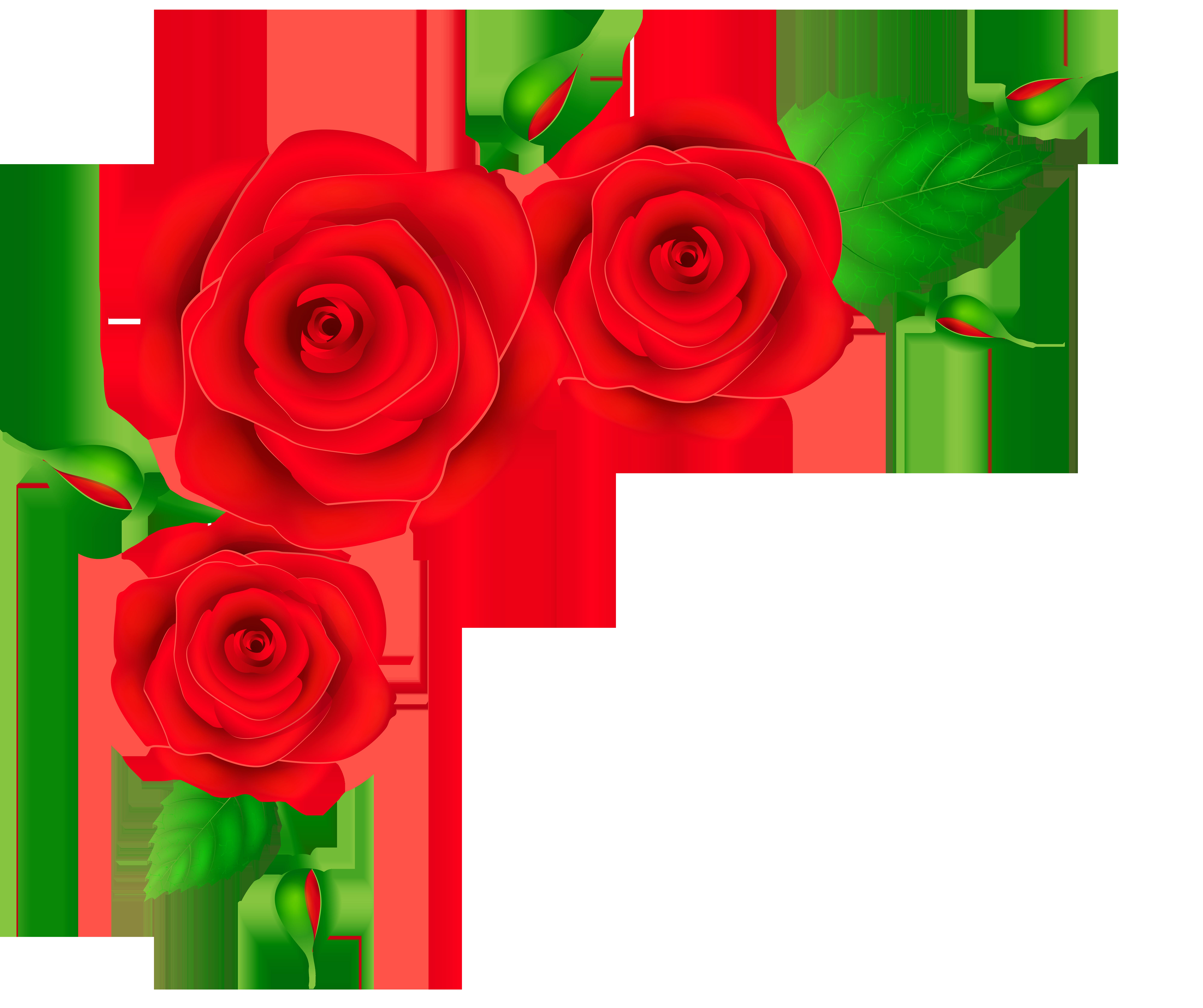 Red Roses Corner Transparent PNG Clip Art Image | Flowery ...