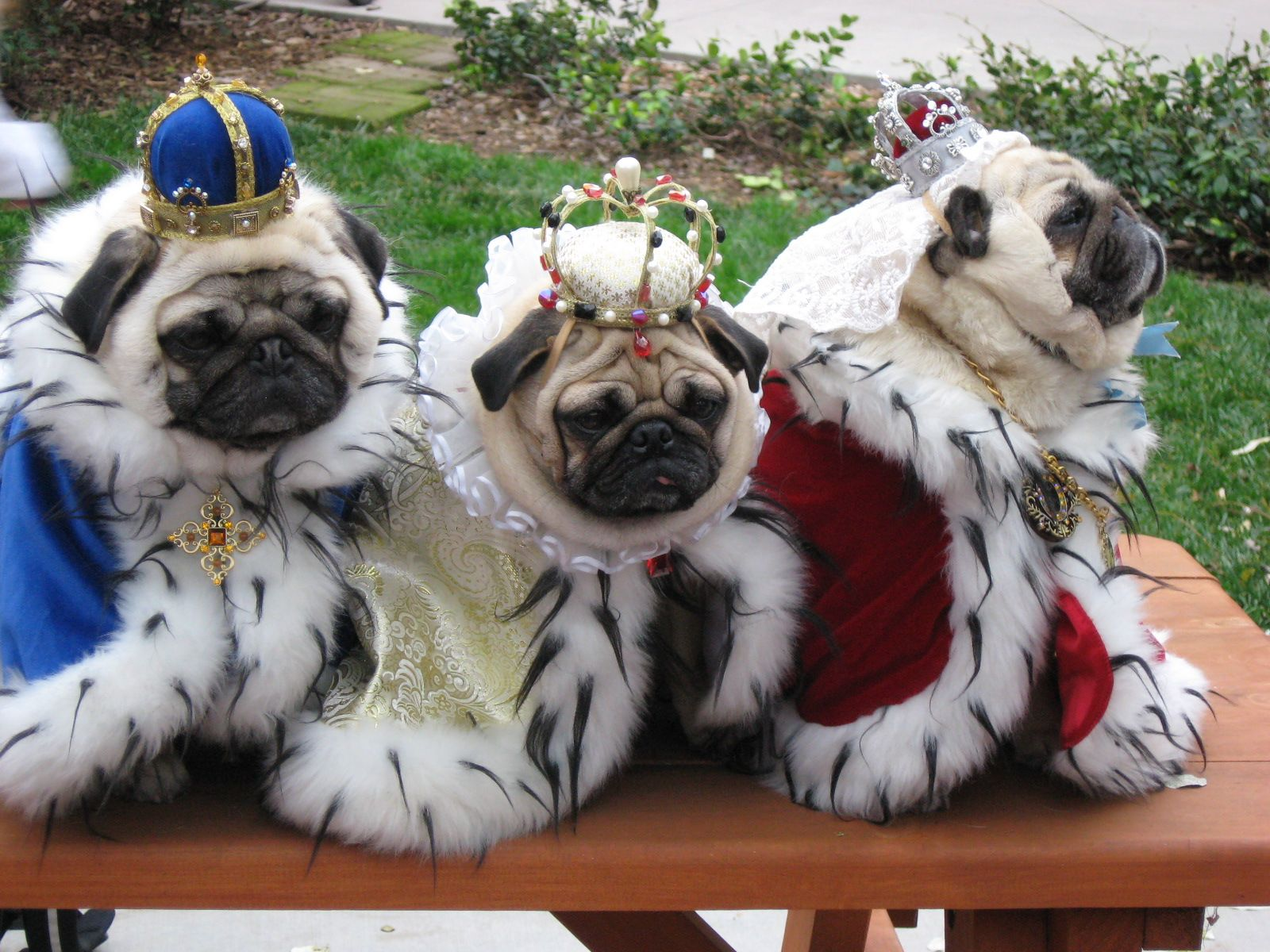 15 Facts You Probably Didn T Know About Pugs Cute Pugs Pugs In